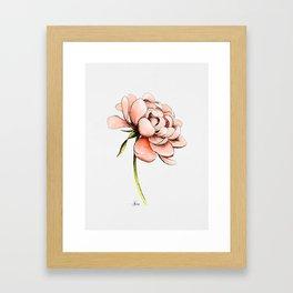 Coral Pink Peony Framed Art Print