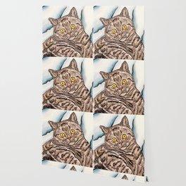 Grey Cat Wallpaper