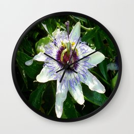 Beautiful Passion Flower With Garden Background  Wall Clock