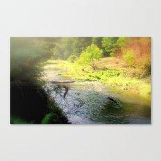 Autumn in the Otway Ranges Canvas Print