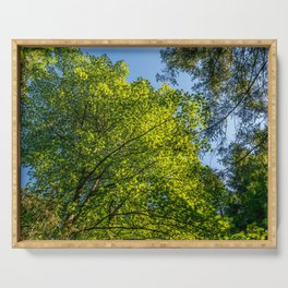 Lush Foliage flooded by Sunlight Serving Tray