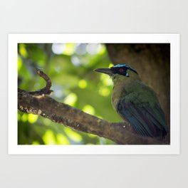 Resting in a Tree - Bird Photography Art Print
