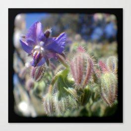 TTV Spring Flower at Fort Mason, San Francisco Canvas Print