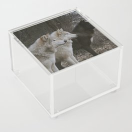 Cana, Logan, and Luther Acrylic Box