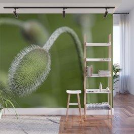 Poppy pod Wall Mural