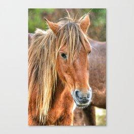 Pony Profile  Canvas Print