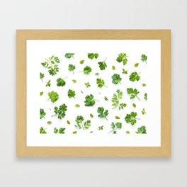 Herbs on White - Landscape Framed Art Print