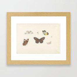 Blad met vijf vlinders en twee vliegen, Pieter Withoos, 1664 - 1693 Framed Art Print