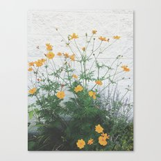 Yellow + Purple Canvas Print