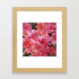 Azalea Framed Art Print