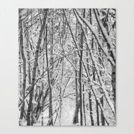 Woodland snow Canvas Print