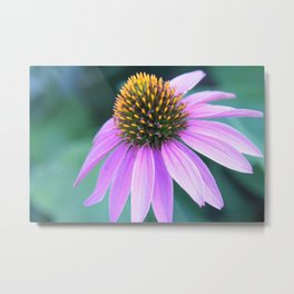 Blooming Beauty Metal Print
