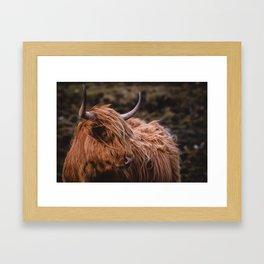Highland Coo Framed Art Print