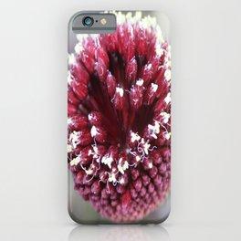 Macro of Round-Headed Leek Flower Allium Sphaerocephalon iPhone Case