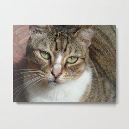 Maria Felix the cat Metal Print
