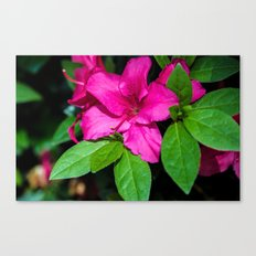Soft and Solid Canvas Print