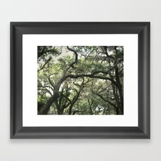 Georgia Live Oaks Framed Art Print