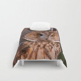 Long eared owl Comforters