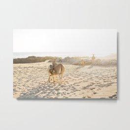 Baja donkeys Metal Print