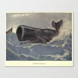 Vintage Sperm Whale Painting (1909) Canvas Print