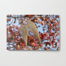 Pampas Grass in Fall Metal Print