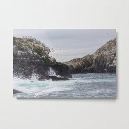 The Farne Islands Cliffs Metal Print