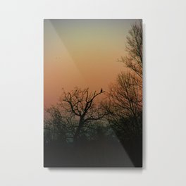 Sunset in the forest Metal Print