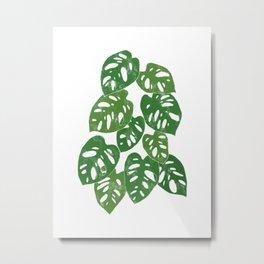 Monstera Adansonii Tropical Houseplant Hand-Painted Art Metal Print
