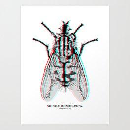 Musca Domestica Art Print