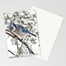 April Fools' Jay Stationery Cards