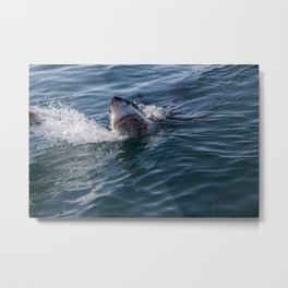 Great White Shark smiles Metal Print