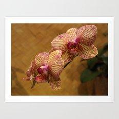 Orchids I Art Print