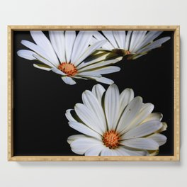White African Daisies Isolated on Black Serving Tray