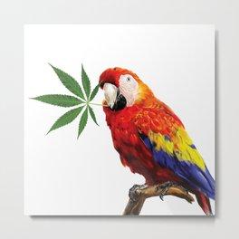 Polly Want A Cracker Metal Print