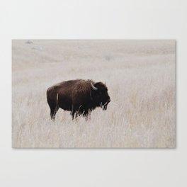 Oklahoma bison Canvas Print
