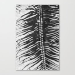 Palm Tree Shadow on Sand in Black and White Canvas Print