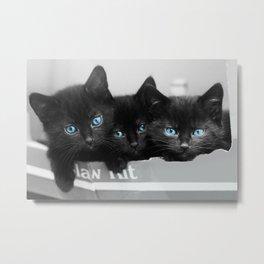 Blue Eyed Kittens Metal Print