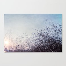 blue harvest 002 Canvas Print