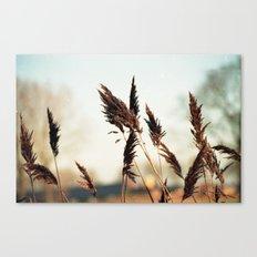 A fresh sunday morning Canvas Print