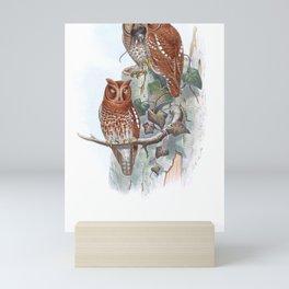 Scops Pennata Gould17 Mini Art Print