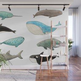 Marine animals Wall Mural