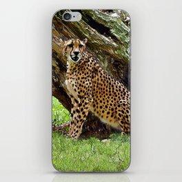 Wild Cheetah iPhone Skin