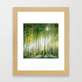 Sunlight Filters through Bamboo Forest Fine Art Print Framed Art Print
