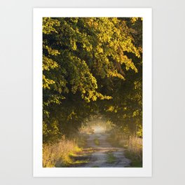 Alley of lime trees in Autumn #2 Art Print