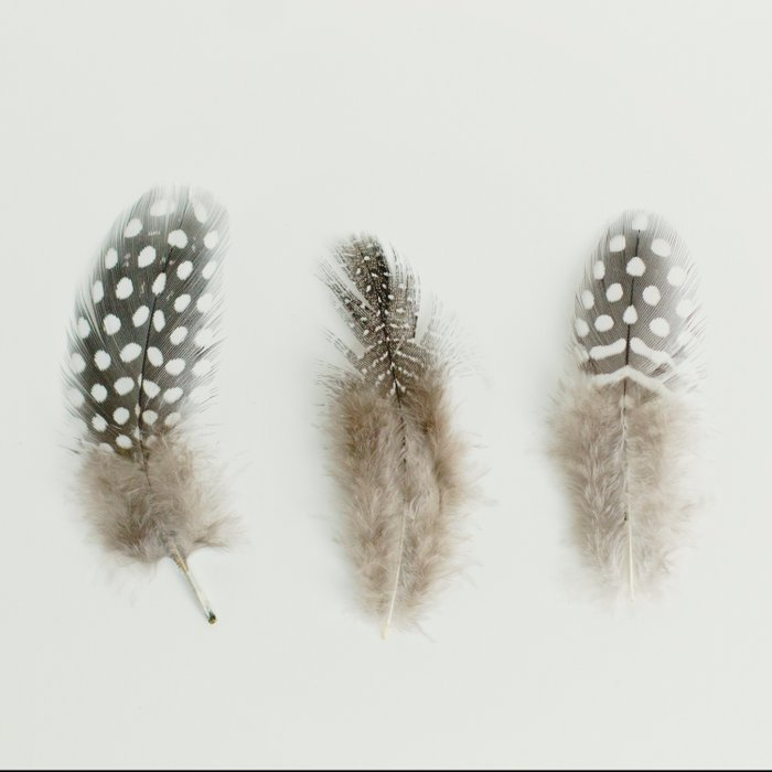 pheasant feathers Comforters