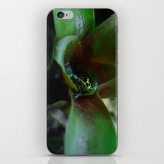Poison dart Frog Ranitomeya Imitator  iPhone & iPod Skin