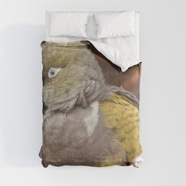 Patagonian Conure Comforters