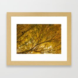 Incandescence Framed Art Print