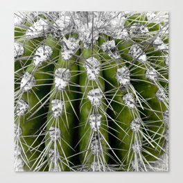 Green Cactus Canvas Print
