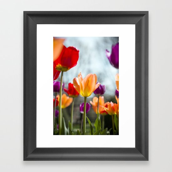 Tulip Dance Framed Art Print